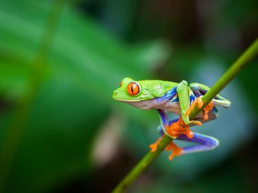 frosch wanderreisen