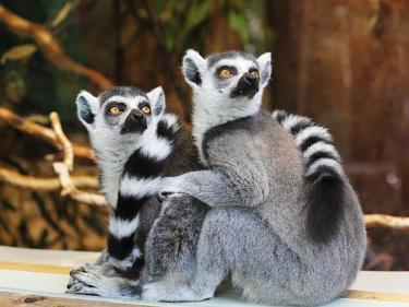 Erlebnisreisen Madagaskar