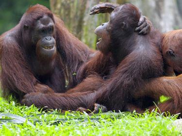 Borneo Erlebnisreise