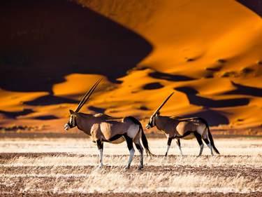 Namibia Sanddünen und Oryx-Antilopen