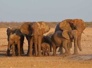 Erlebnisreisen Tansania