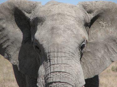Tansania Erlebnisreisen