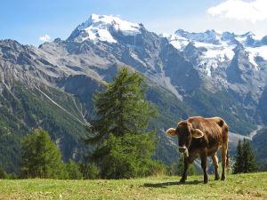 4000er Woche im Wallis