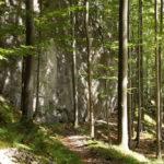 Ursprünglicher Bergwald
