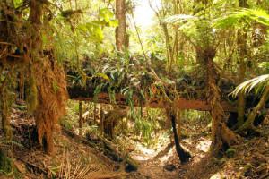Los Quetzales Nationalpark