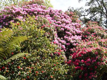 Gärten in Cornwall