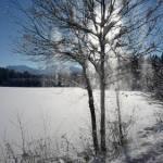 winter-allgaeu-baum